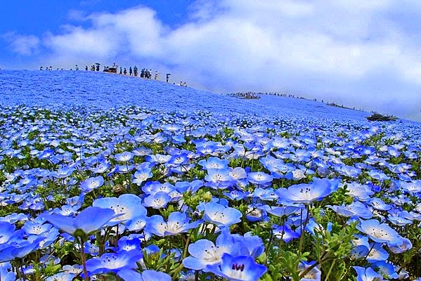 Ikebana el arte floral japon s ya es primavera en jap n for Jardines kawachi fuji