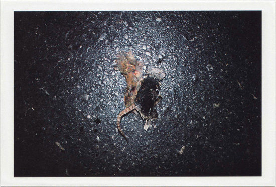 dirty photos - umbra - a night street photo of a dead rat on the asphalt