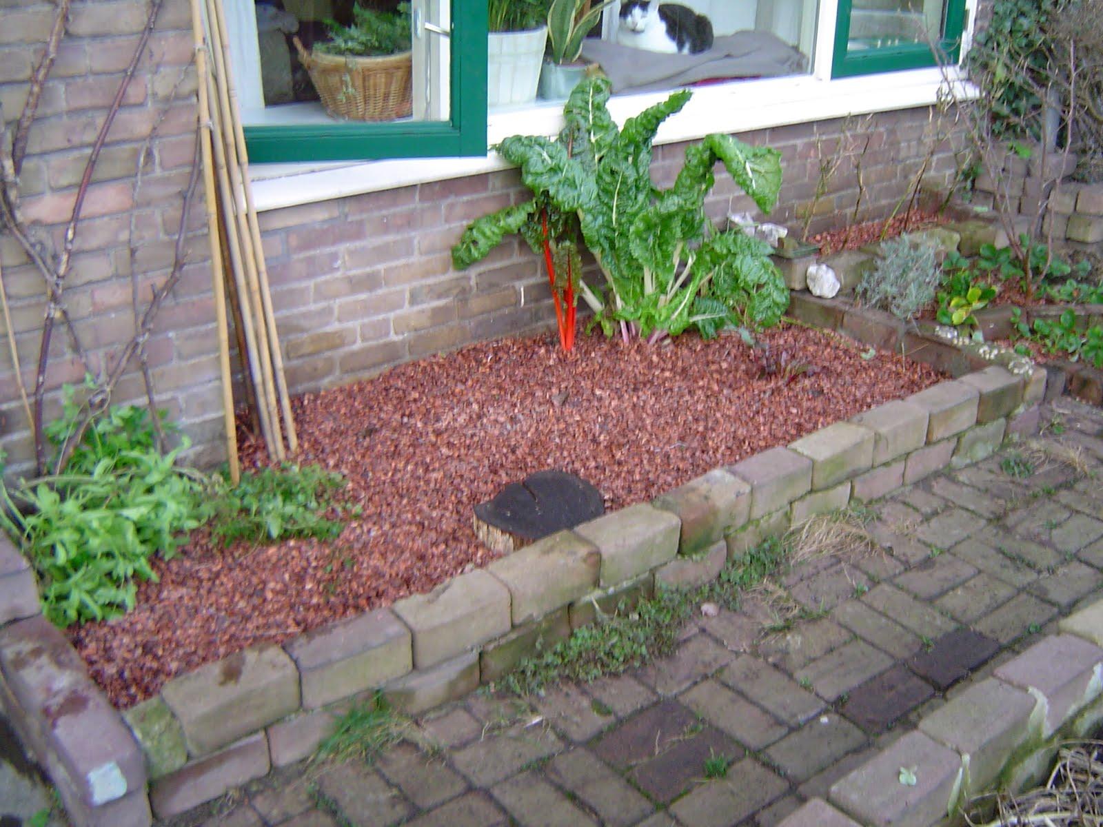 mijn kleine moestuin alvast cacaodoppen en op zoek naar On cacaodoppen tuin