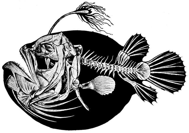 Artes de Pesca: PEZ BALÓN