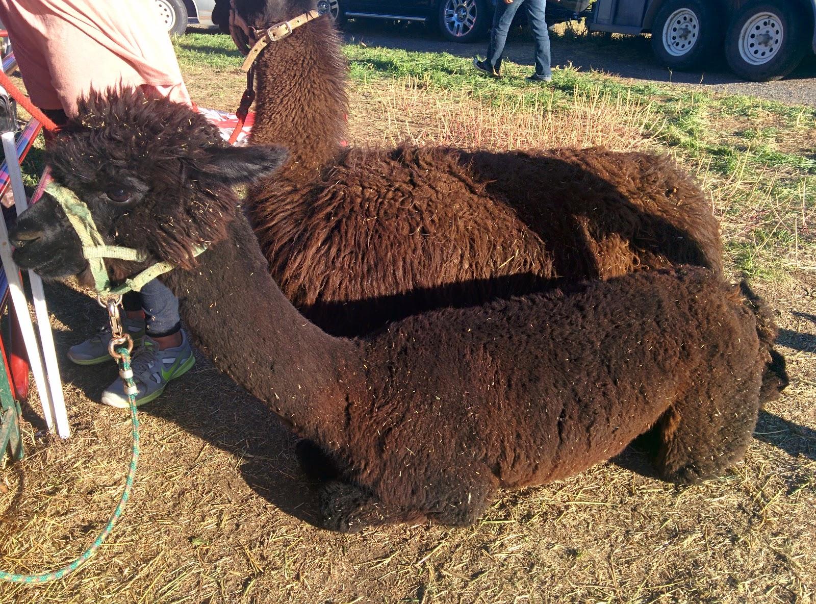 Camels woman blog
