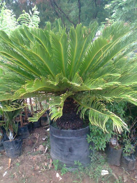 Specimen garden plants nursery