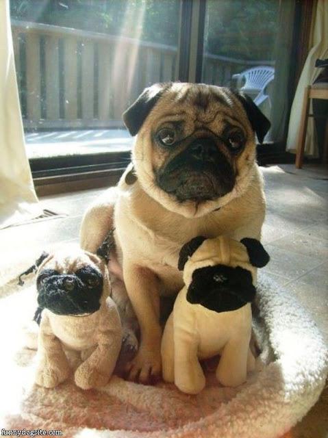 Hình ảnh ngộ nghĩnh nhất về cún