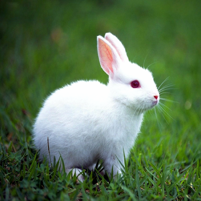 external image Types-of-rabbits.png