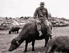 Dr. Antonio e os seus búfalos.