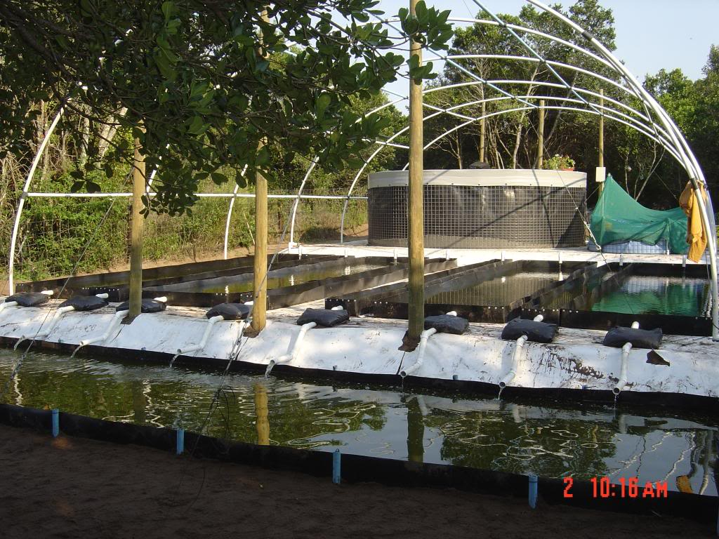 high tunnel aquaponics high tunnel aquaponics in south africa