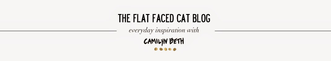 the flat faced cat by camilyn beth