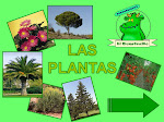 U.D. Las plantas