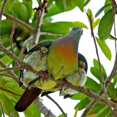 """""""Él te cubrirá con sus plumas y bajo sus alas estarás seguro."""""""