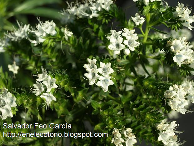 En El Ecotono Algunos Arbustos En Flor En El Jardin Botanico Febrero - Arbustos-de-flor