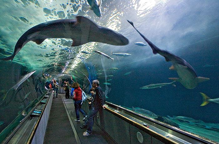Aquarium Of The Bay Em San Francisco Dicas Da Calif Rnia