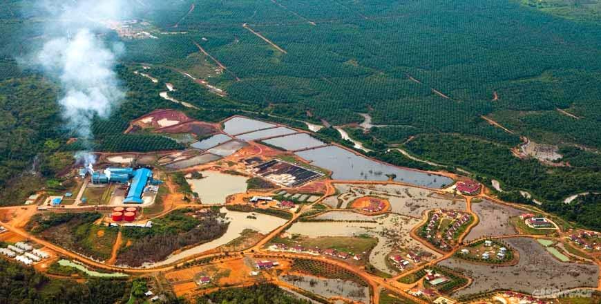 Ini Tanggapan Greenpeace Debat Capres Sektor Kehutanan