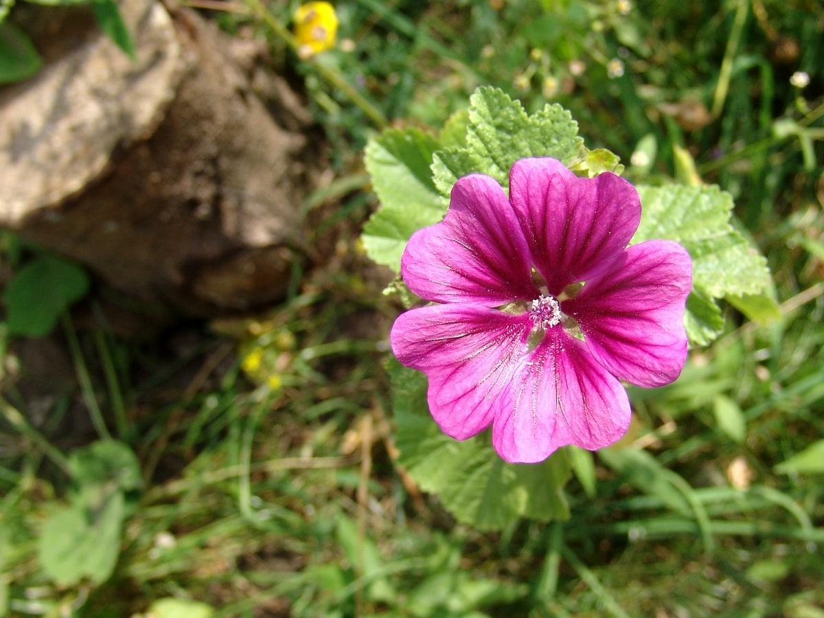 rosas no jardim poema : rosas no jardim poema:FLORES COR DE VINHO – Poemas surrealistas