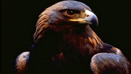 http://native-american-totems.com/animal-totem-medicines/eagle-animal-totem/