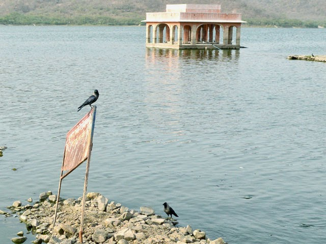 birds taking rest at Jal Mahal