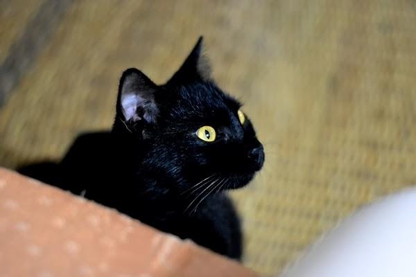 Bagaimana Merawat Kucing Cedera Detik Detik Indah
