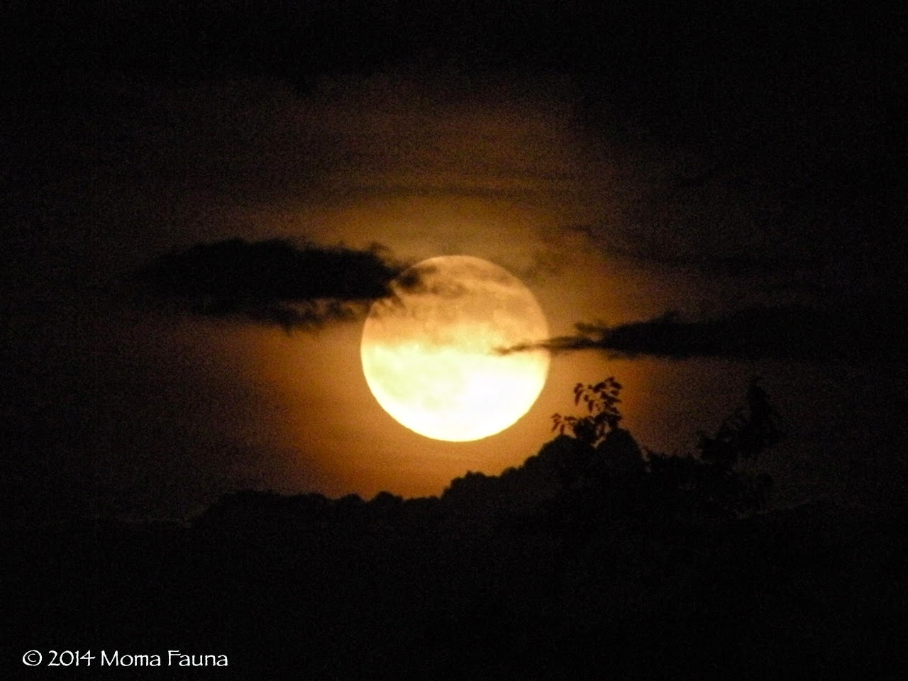 Buck Moon Risen