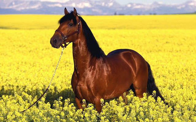 horses+pictures+%25286%2529