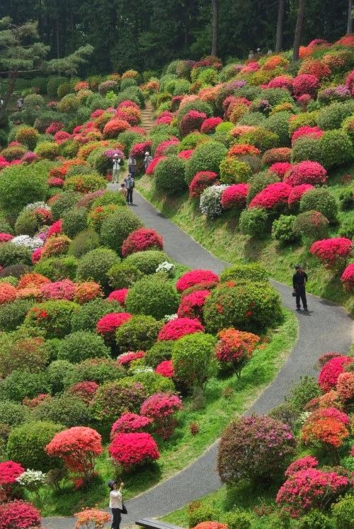 Japanese Garden Landscape ~ Stunning Nature