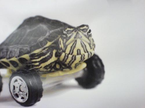 Il manuale del giovane scribacchino young hack manual for Sassi per tartarughe