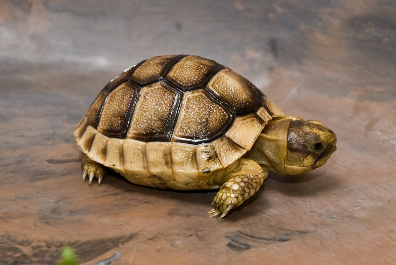 Information of Animal: Turtles Pet