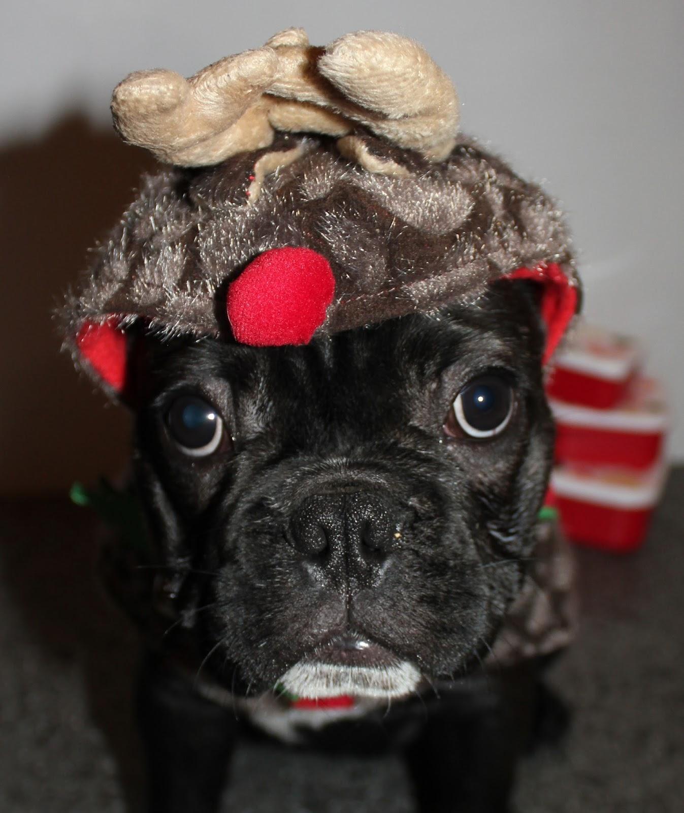 Christmas Photo Shoot with Milo