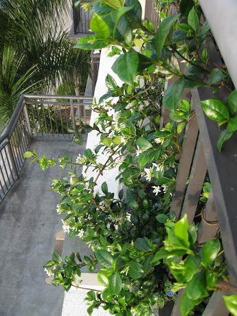 Jasmine hoping to hide handrail