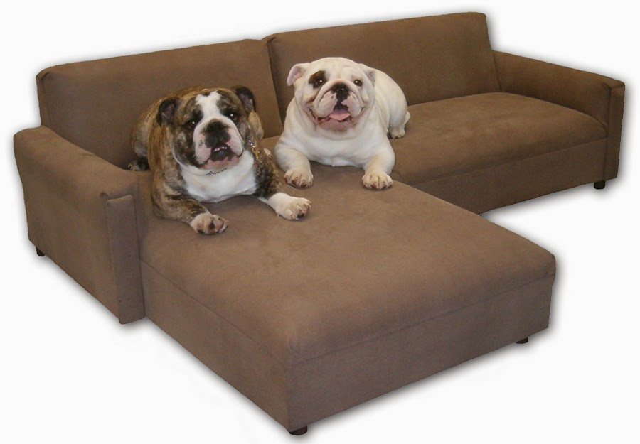 protect furniture from pets
