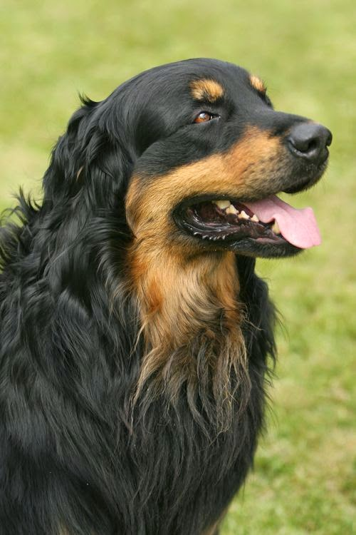 Top 5 Awesome Dog Breeds