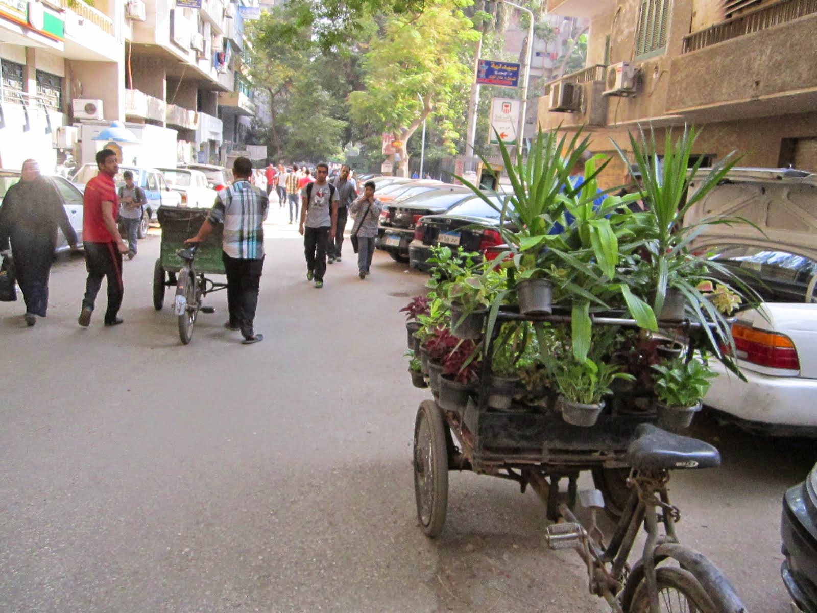 Sustainable Transport for Plants in Cairo!