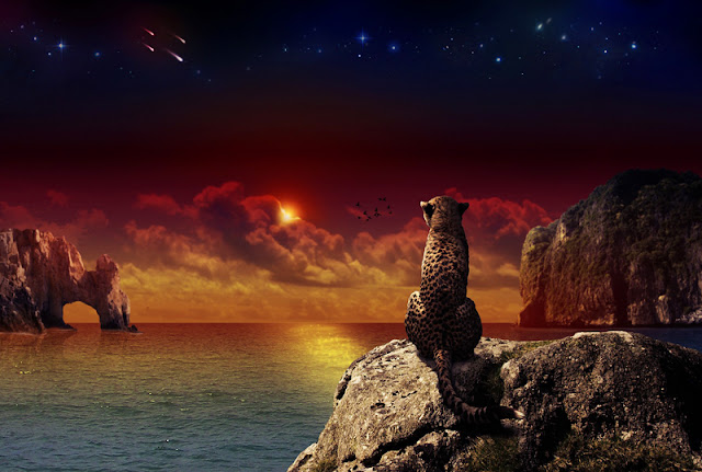 guepardo y estrellas