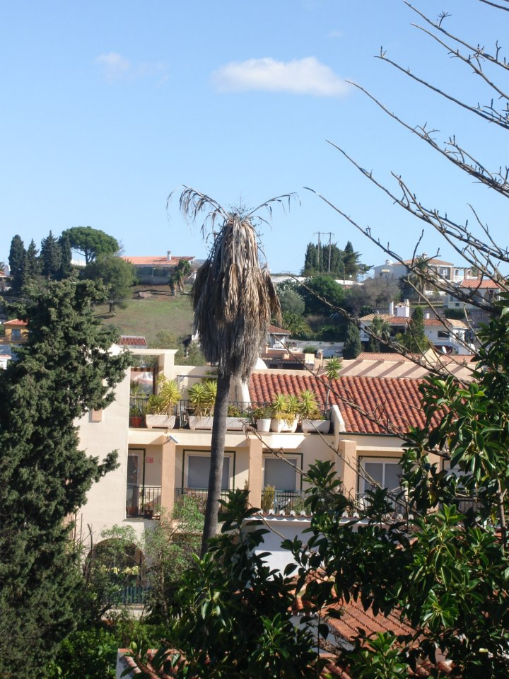 Poda de arboles y palmeras en valencia jardiner a en - Jardineria en valencia ...