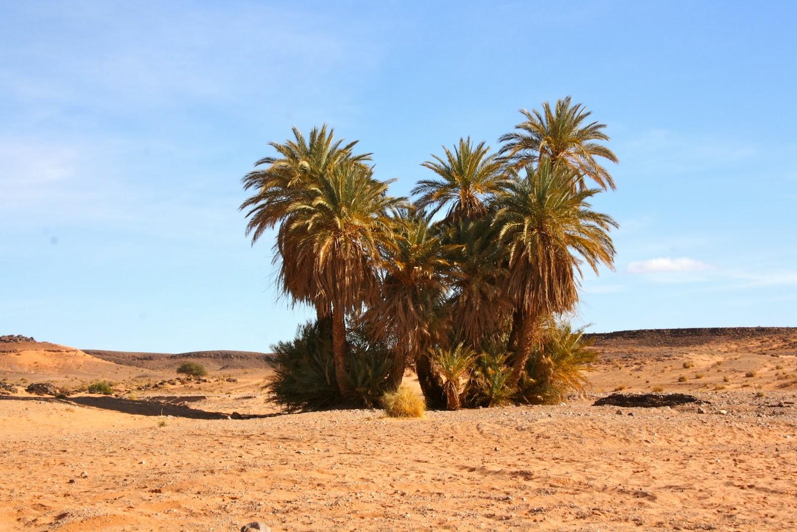 desierto de marruecos, viajar a marruecos, felicidad, arfoud, alojamiento rural.
