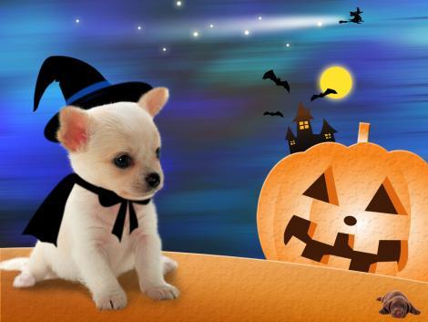 Halloween Wallpapers - Free Halloween Wallpapers: Puppy ...