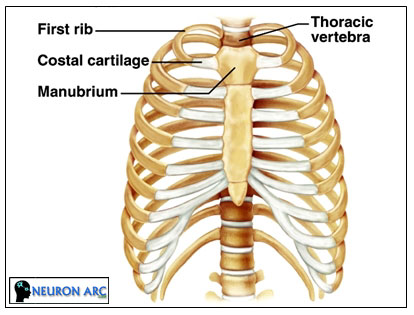 Cartilaginous joints Definition,Types