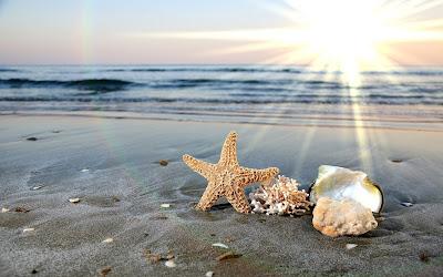 Hình nền ốc biển ở đại dương tuyệt đẹp.