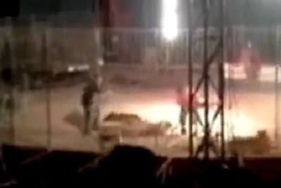 tigre mata a su domador entrenador en mexico hermanos suarez