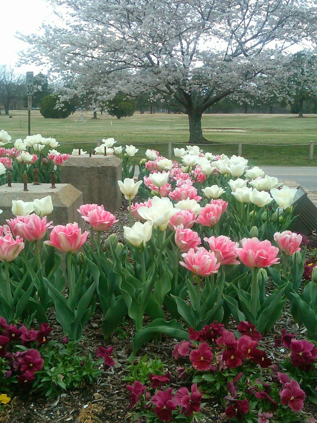 Memphis trees spring returning for Garden trees memphis