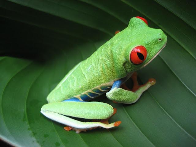 Imag Paisaje Animales Costa Rica_5
