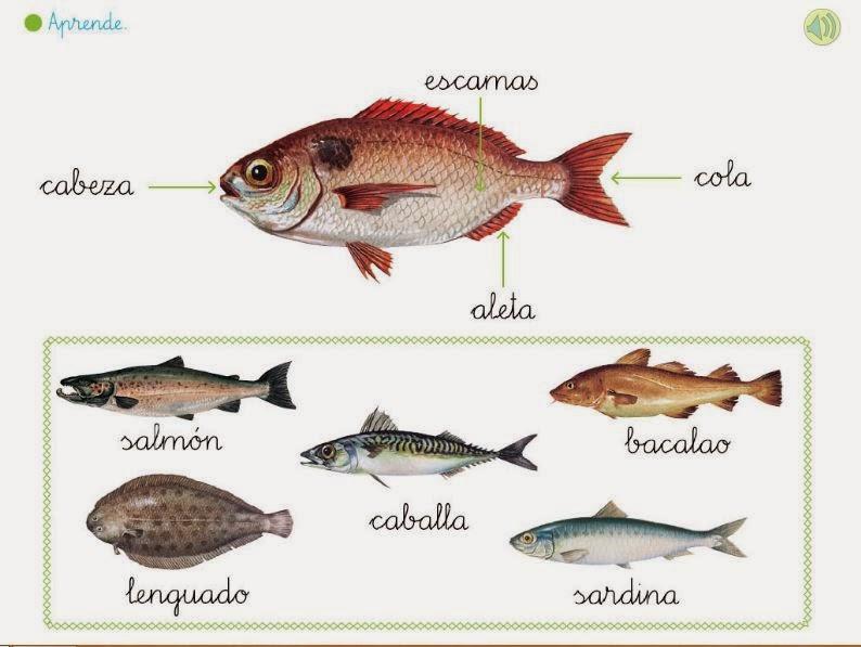 http://primerodecarlos.com/primerodecarlos.blogspot.com/febrero/caract_peces.swf