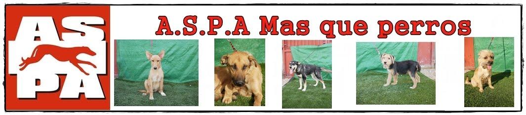 A.S.P.A Mas que perros