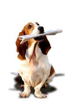 Categoría perro de Utilidad