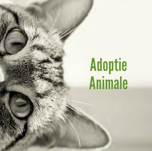 adoptieanimale.ro
