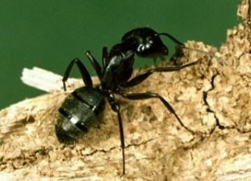 http://www.opoae.com/2013/04/semut-punya-kemampuan-untuk-mendeteksi.html