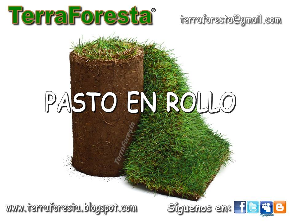 Pasto en rollo terraforesta pasto en rollo for Cesped en rollo