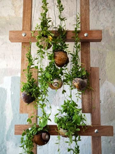 jardim vertical urbano:Um jardim para cuidar: Jardinar na cidadeé possivel !