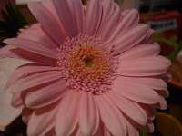 HAPPINESS IS A PINK DAISY