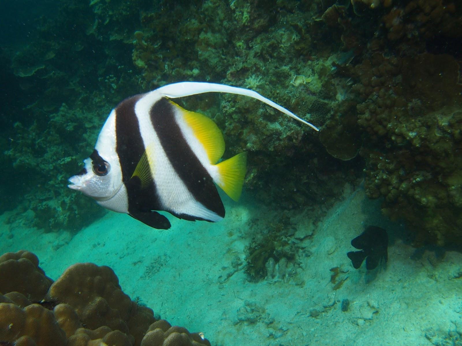 Too Short Scuba Diving