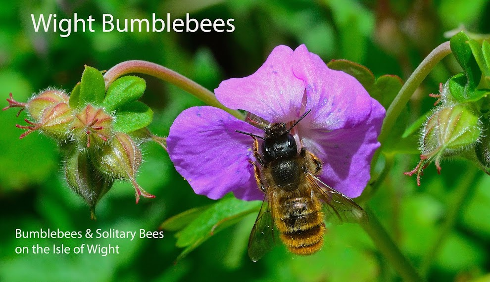 Wight Bumblees