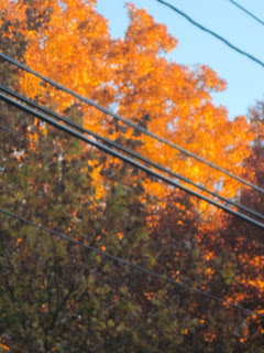 Fall leaves on Long Island